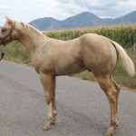 horses 033