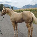 horses 034
