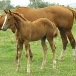 horses 150