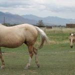 horses 165